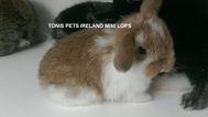 Tonis Pets Ireland Mini Lops